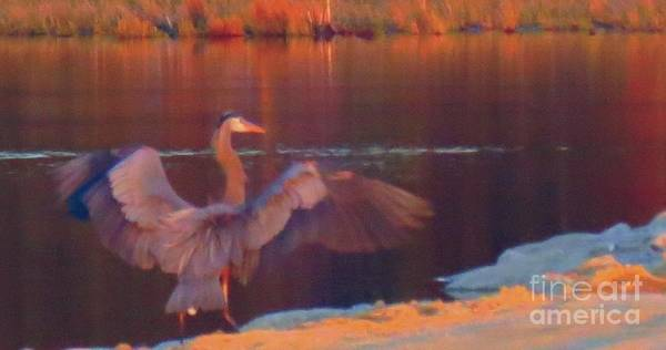 Wildlife Refuge Digital Art - Heron At Dawn 02 At Blackwater by Rrrose Pix
