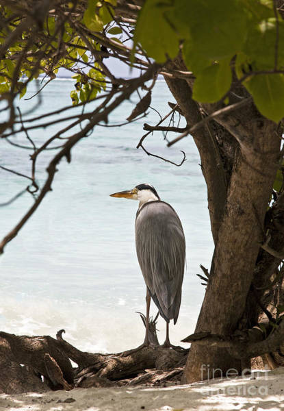 Ardea Photograph - Heron by Jane Rix