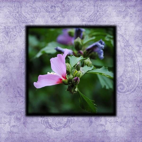 Photograph - Hibiscus II Photo Square by Jai Johnson
