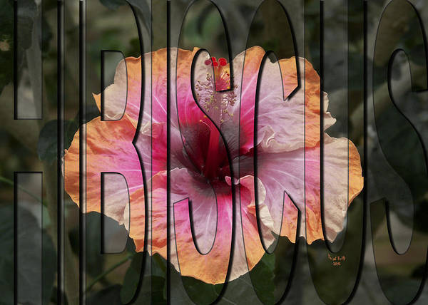 Photograph - Hibiscus by Trish Tritz
