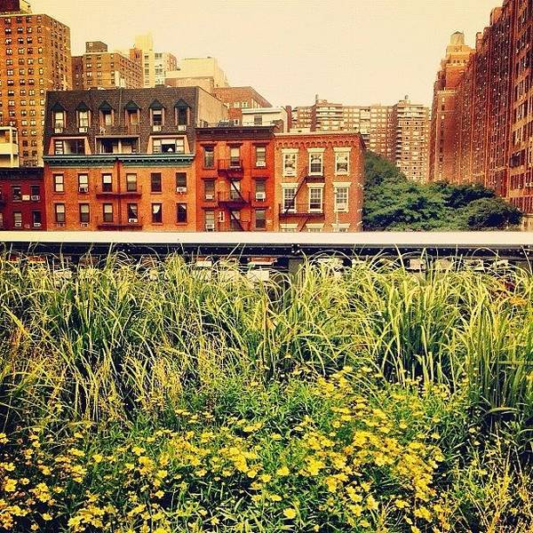 Wall Art - Photograph - High Line Wildflowers by Vivienne Gucwa