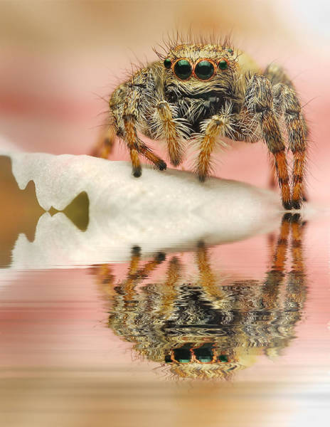 Wall Art - Photograph - High Tide-spider Jumping by Ferdinando Valverde