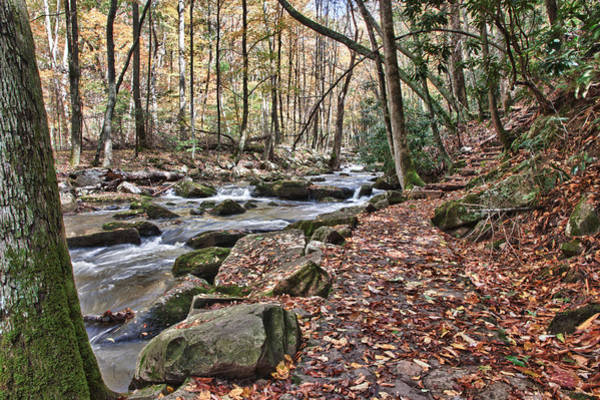 Photograph - Hiking Trail To Cascade Falls by James Woody