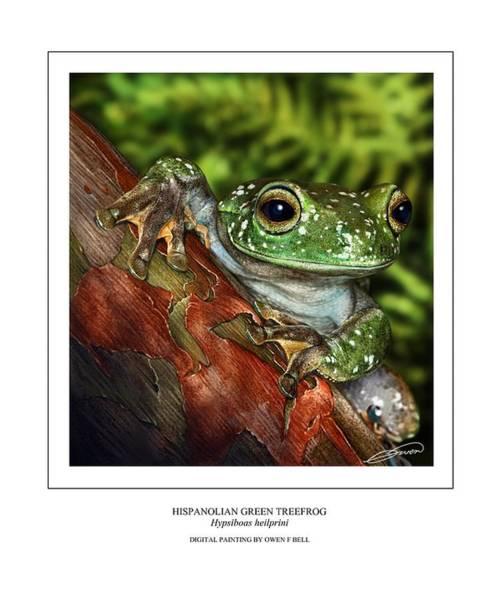 Hispanolian Green Treefrog Art Print by Owen Bell
