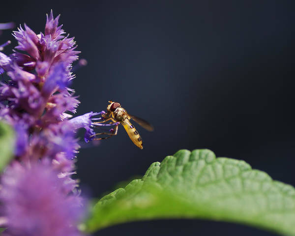 Hover Photograph - Hold On by Susan Capuano