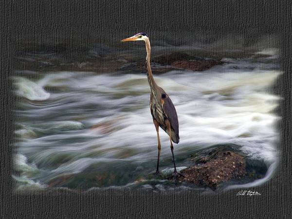 Heron Mixed Media - Hold That Pose by Bill Stephens