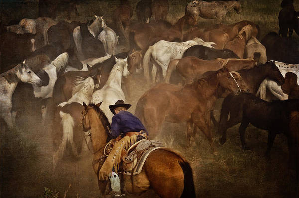 Photograph - Holding Herd by Pamela Steege