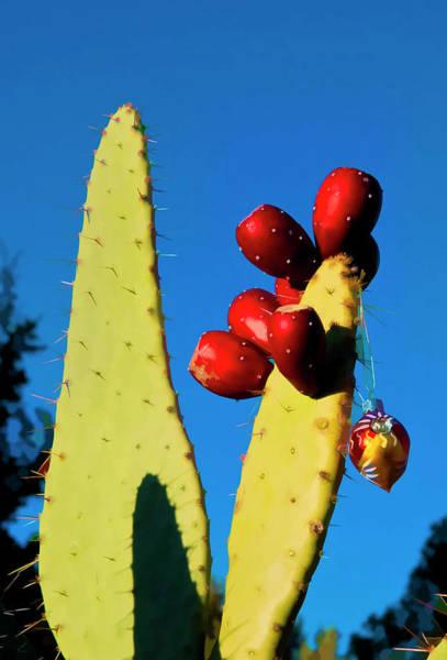 Photograph - Holiday Cactus 2 by Lou  Novick
