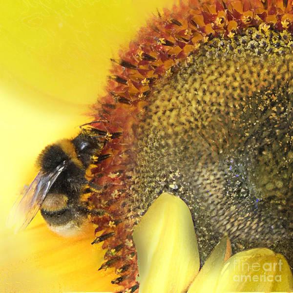 Nectar Mixed Media - Honey Bee by Anne Weirich