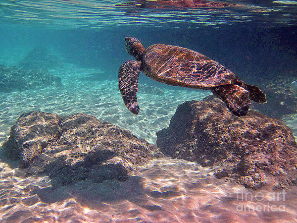 Photograph - Honu - Underwaterscape by Bette Phelan