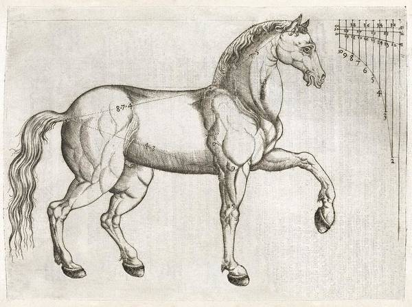 Arte Photograph - Horse Anatomy, 16th Century Artwork by Middle Temple Library