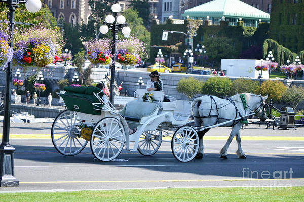 Photograph - Horse And Buggy by Traci Cottingham
