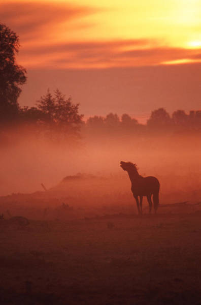 Romance Photograph - Horse At Sunrise by John Foxx
