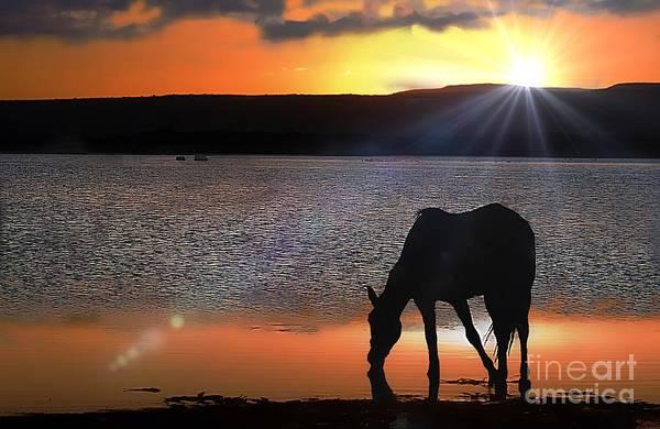 Horse Drinking Water  Art Print