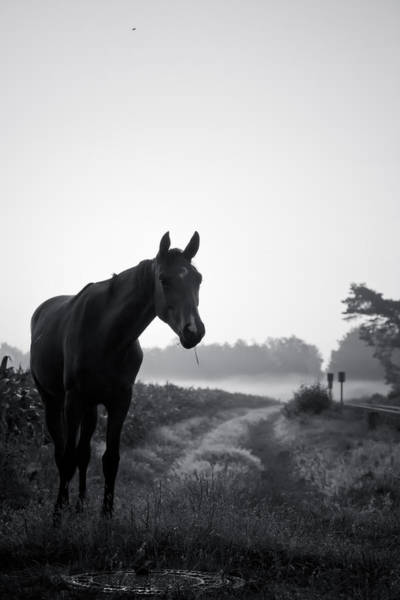 Pferd Photograph - Horse In A German Field Early Morning 2 by Edward Myers