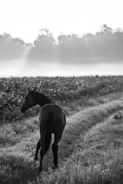Pferd Photograph - Horse In A German Field Early Morning 4 by Edward Myers