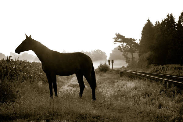 Pferd Photograph - Horse In A German Field Early Morning by Edward Myers