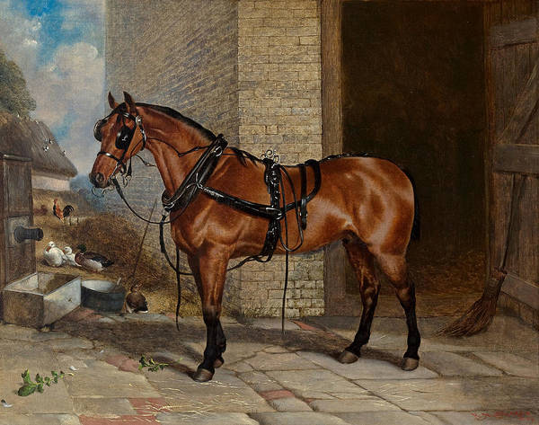Herd Of Horses Wall Art - Painting - Horse In Harness by Robert Nightingale