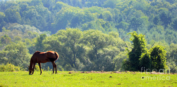 Photograph - Horse In Pasture by Steve Somerville