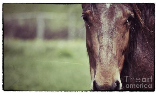 Photograph - Horse Love by Traci Cottingham