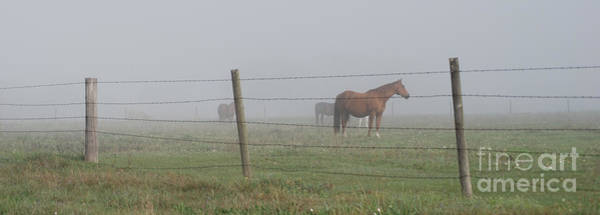 Photograph - Horse Pasture by Paulette B Wright