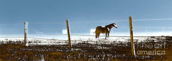 Photograph - Horse Pasture Revdkblue by Paulette B Wright