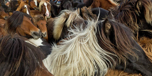 Wall Art - Photograph - Horse Round-up by Arctic-Images