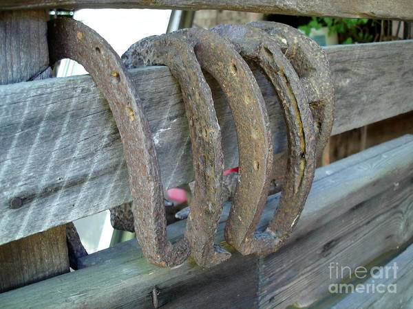 Horse Shoes Art Print