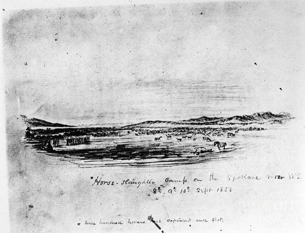 Destiny Drawing - Horse Slaughter Camp 1858 by Granger