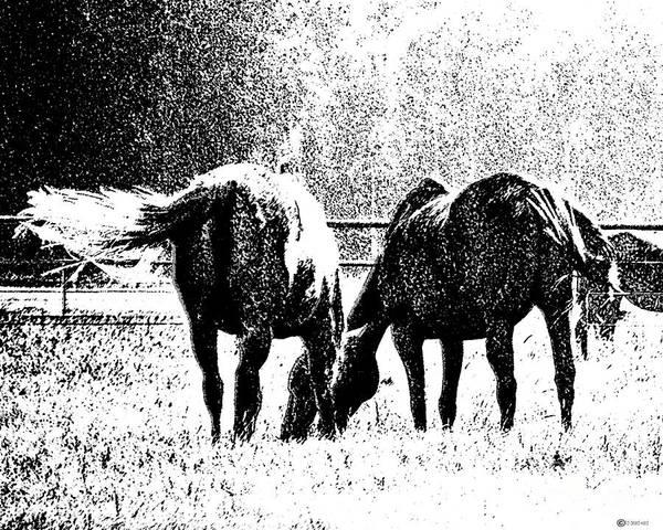Digital Art - Horse Tails by Lizi Beard-Ward