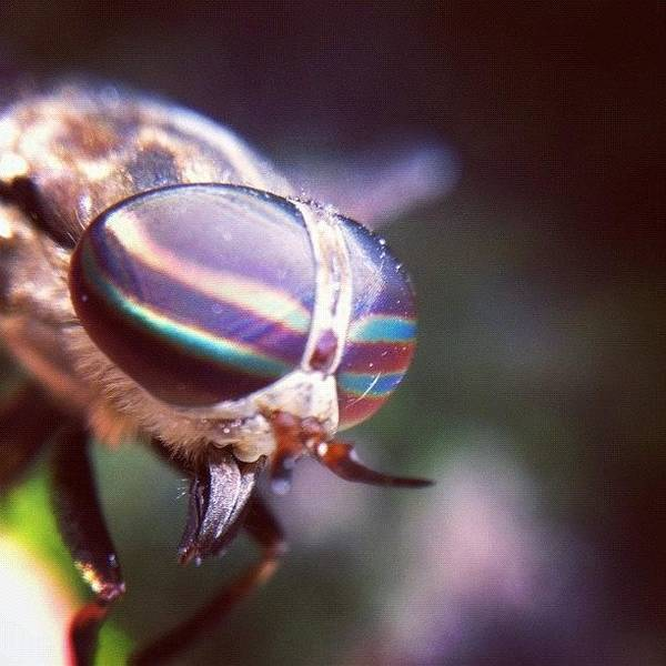 Eden Wall Art - Photograph - Horsefly by Dave Edens