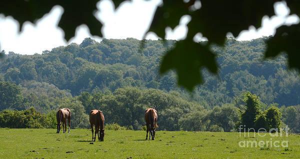 Horses And Summer Breeze Art Print