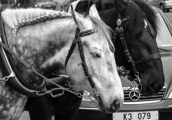 Photograph - Horses And The Mercedes by Ari Salmela