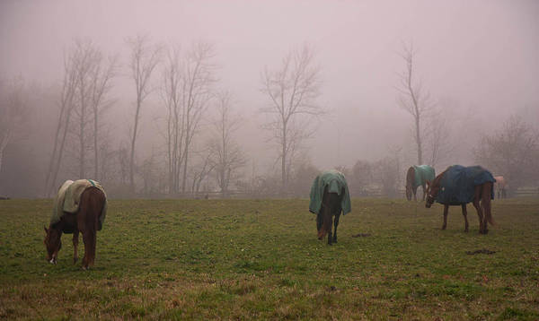 Photograph - Horses by Nick Mares