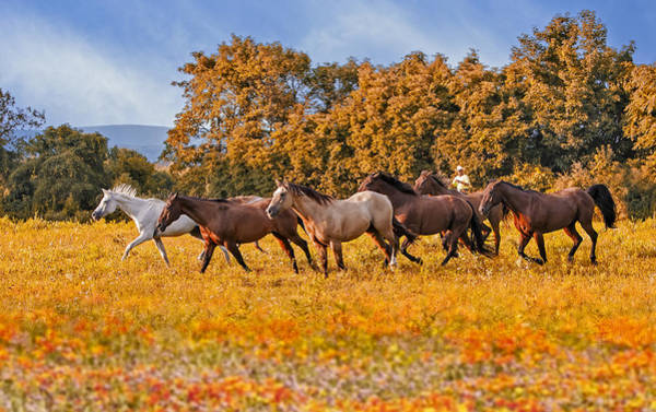 Photograph - Horses Running Free by Susan Candelario
