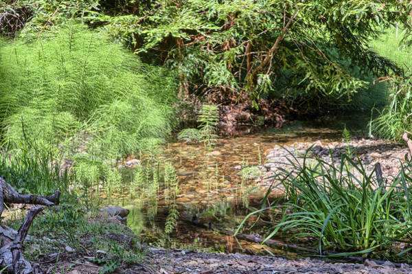 Photograph - Horsetail And Stream by Peter Dyke