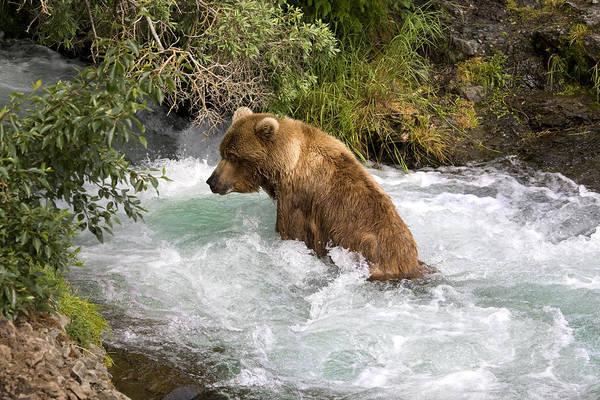Grizzly Bears Digital Art - Hot Tub Bear by Dewain Maney