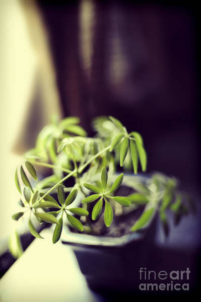 Windowsill Photograph - Houseplant by HD Connelly