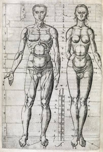 Arte Photograph - Human Anatomy, 16th Century Artwork by Middle Temple Library