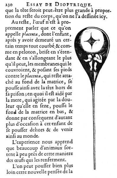 Digital Art - Human Sperm - 17th Century by Granger