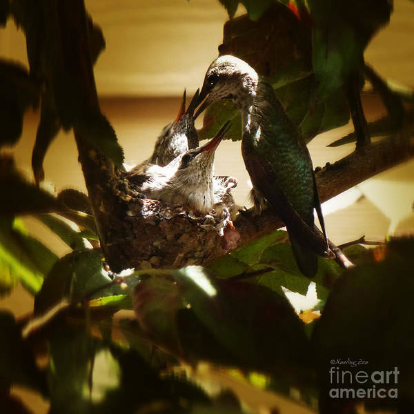 Photograph - Hummingbird Mother Feeding Her Two Babies II by Xueling Zou