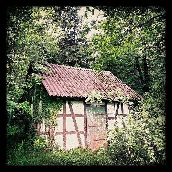 Wall Art - Photograph - Hut In The Forest by Matthias Hauser