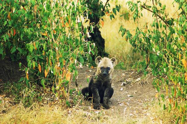 Photograph - Hyena Pup by Belinda Greb