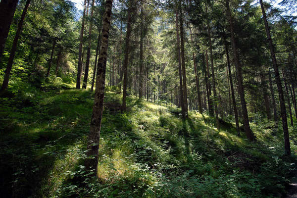 Wall Art - Photograph - I Love The Forest by Heinz G Mielke