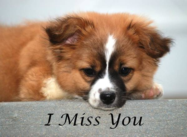 Miss You Photograph - I Miss You Card by Michael Peychich
