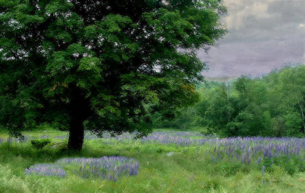 Photograph - I Planted A Lupine Garden In My Dreams by Wayne King