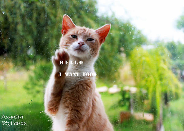 Want Digital Art - I Want Food Cat by Augusta Stylianou