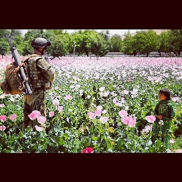 Guns Photograph - I Want To #visit The #afghani #poppy by Explore More