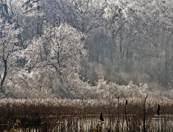 Photograph - Ice Storm 2008 by Frank Winters