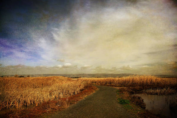 Wall Art - Photograph - If I Could See Into The Future by Laurie Search